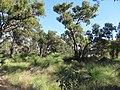 OIC hamersley reid hwy forest 1.jpg
