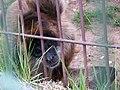 Oaklawn Farm Zoo, May 16 2009 (3538893041).jpg