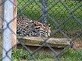 Oaklawn Farm Zoo, May 16 2009 (3539723536).jpg