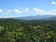 Pertanian Dan Perkebunan Di Indonesia Wikipedia Bahasa Indonesia