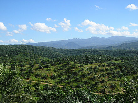 Vast palm oil plantation in Bogor, West Java. Currently, Indonesia is the world's largest producer of palm oil. Oil palm plantation in Cigudeg-03.jpg