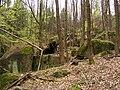 Oldřichovská vrchovina, sever, bučina 11.jpg