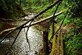 Old-trail-bridge - West Virginia - ForestWander.jpg