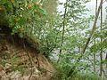 Omiķu grava - mikroskops - Panoramio.jpg
