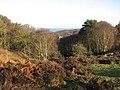 On the edge of Roman Camp - geograph.org.uk - 1085447.jpg