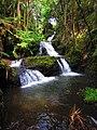 Onomea Waterfall (23968031723).jpg