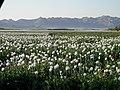 Opiume - panoramio.jpg