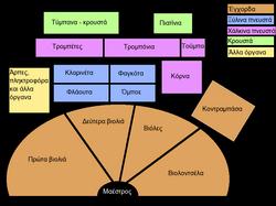 b0b7545beae Τυπική διάταξη των οργάνων της συμφωνικής ορχήστρας.