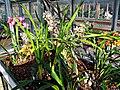 Orchids (6902494653).jpg