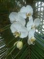 Orquidea009.png