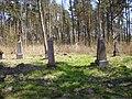 Osowiec. Cmentarz 4.JPG