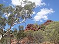 Outback Trip - Kings Canyon 2 (4132998952).jpg