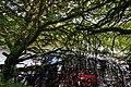 Overhanging tree - geograph.org.uk - 1417817.jpg