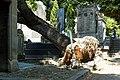 Père-Lachaise - Division 4 - arbre déraciné 01.jpg