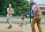 PMO K-9 unit conducts bite training 150415-M-TH981-003.jpg