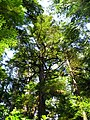 Pacific Rim National Park - Rainforest Trail (3671484974).jpg
