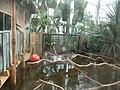 Paignton , Paignton Zoo, Crocodile Swamp - geograph.org.uk - 1484608.jpg