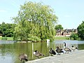 Painswick Park - geograph.org.uk - 511887.jpg