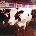 Pannello fotografico lavorazione Parmigiano-Reggiano (1 di 6) - Musei del cibo - Parmigiano - 217b.tif