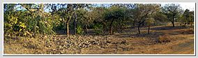 Panorama of Jungle-Dedakadi Area-Sasan Gir-Gujarat-India.jpg