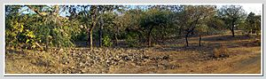 Gir Forest National Park - Panorama of Jungle