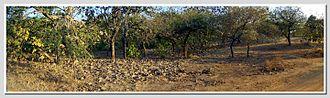 Gir National Park - Panorama of Jungle