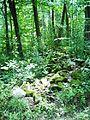 Parc-nature du Bois-de-l-ile-Bizard 06.jpg