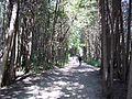 Parc-nature du Bois-de-l-ile-Bizard 47.jpg