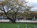Category large round basin of jardin des tuileries wikimedia commons - Grand bassin de jardin ...