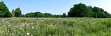 Park of Burg Anholt.jpg