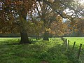 Pastures, Hambleden - geograph.org.uk - 1055926.jpg
