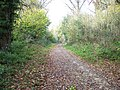Path in the woods - geograph.org.uk - 1590987.jpg
