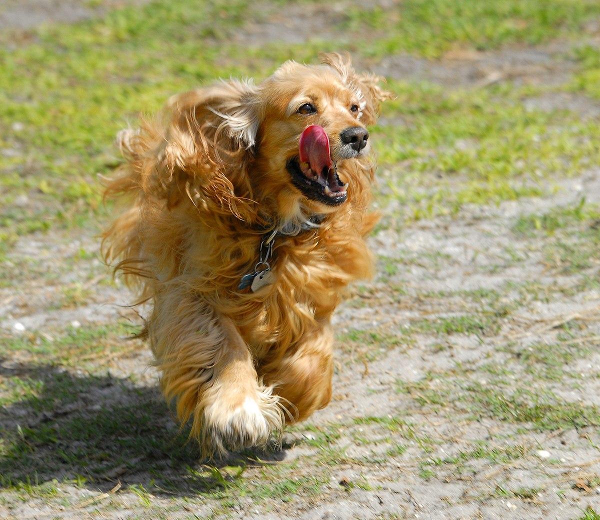 Training Dog Chocker