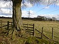 Penty Pylons - geograph.org.uk - 372186.jpg