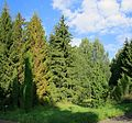 Pereslavl Arboretum R42.jpg