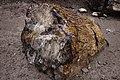 Petrified wood in Escalante Petrified Forest State Park 01.jpg