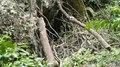 File:Phang Nga - Wat Suwannakuha P1120514.ogv