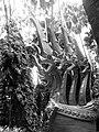 Phaya Naga @ Kam Cha Nod , สระพญานาคที่ป่าคำชะโนด บ้านดุง จ.อุดรธานี - panoramio.jpg