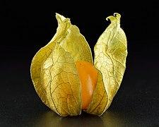 Physalis peruviana calix open close-up.jpg