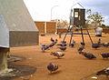 Pigeons at an OvoControl Feeder.jpg