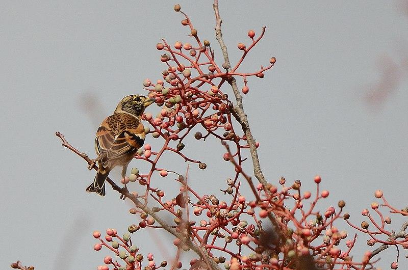 ציפור על ענף של אלה אטלנטית
