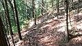 Pines - panoramio (16).jpg
