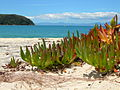 Plant on beach - Abel Tasman National Park.jpg