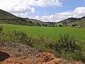Plantação de milho.jpg
