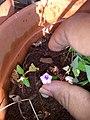Plants at Bijalinagar 25.jpg