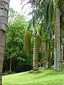 Plants at Queen Sirikit Botanic Garden - Chiang Mai 2013 2652.jpg