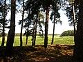 Plyasheva, Rivnens'ka oblast, Ukraine - panoramio.jpg