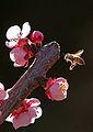 Pollination 1.jpg