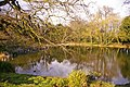 Pond, Lakeside, Enfield - geograph.org.uk - 735352.jpg