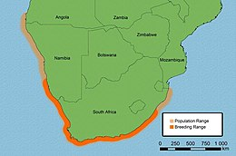 Population and breeding range of the African Black Oystercatcher Haematopus moquini.jpg